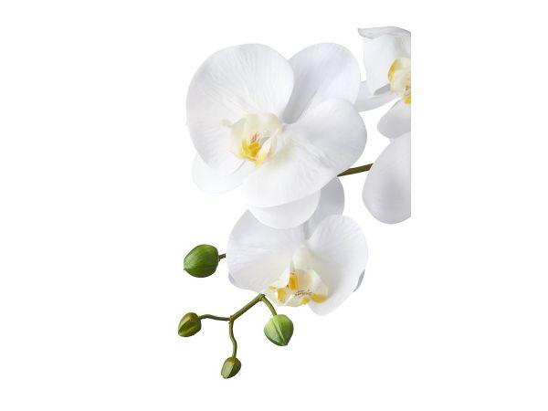 Orchidee / Phalaenopsis XXL 5-tak wit 90 cm hoog detail - Kunstplantshop.nl
