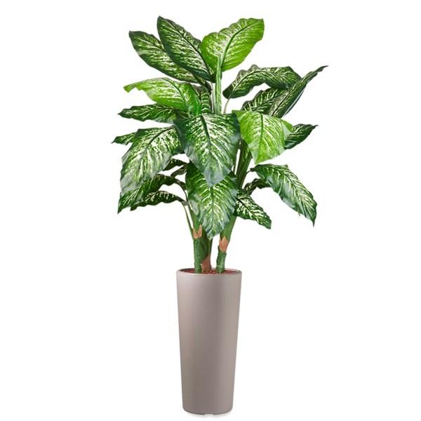 HTT - Kunstplant Dieffenbachia in Clou rond taupe H185 cm - kunstplantshop.nl