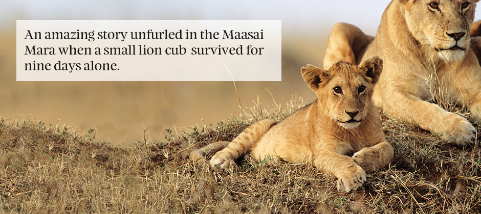 Mother And Daughter Wallpaper Quotes The Story Of The Lost Lion Cub Kuoni Travel