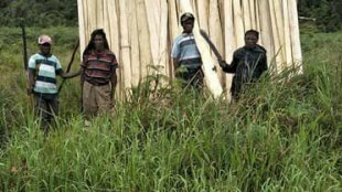 Orang Asli Paniai mempersiapkan bahan pembangunan kantor Adat di Paniai (dok. KM)
