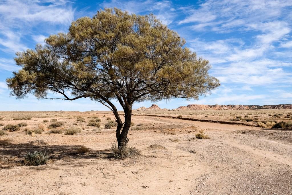 Baum Mit Arckaringa Hills Im Hintergrund