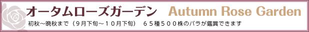 オータムローズガーデン(9月中旬~10月下旬)