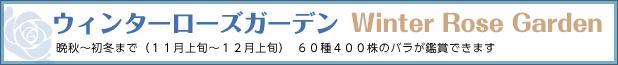 ウィンターローズガーデン(11月上旬~12月上旬)