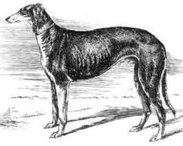 gorsky_hound