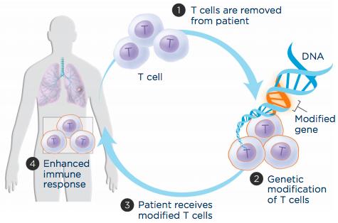 Qvc nutrisystem diabetic