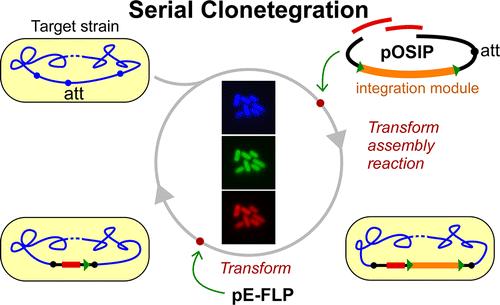 serial_clonetegration