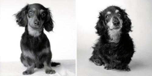 Amanda Jones kutyája, Lily 8 hónaposan és 15 évesen