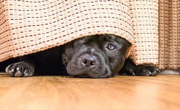 Vihar alatt a kutya elbújhat az ágy alá (Fotó: comfortzone.com)