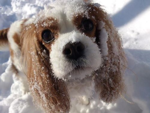 Bármennyire is szeretik a havat, kutyáink is fázhatnak (thedoghome.com)