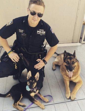 A kis németjuhász a New York-i Rendőrség kiképzésén