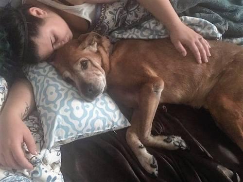 Szeretetben teltek az idős kutya utolsó napjai (Fotó: Facebook/FAACAC)