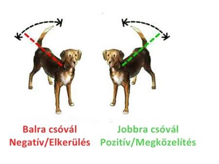 A csóválás iránya fontos üzenetet hordoz a kutyáról (Fotó: psychologytoday.com)