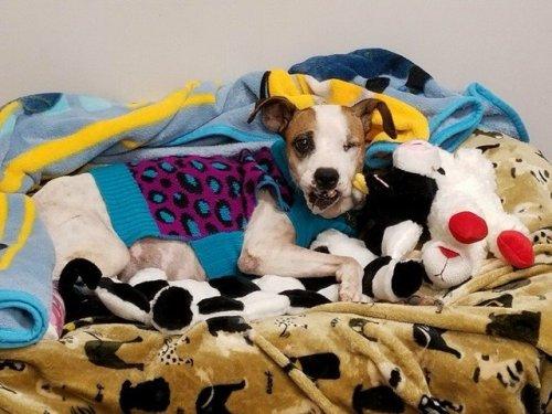 A sérült kutya gyógyulása hosszú folyamat