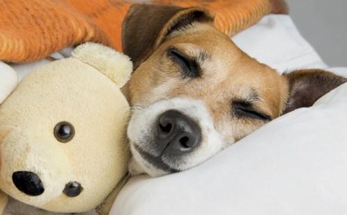 3 millió gazdás kutya él Magyarországon