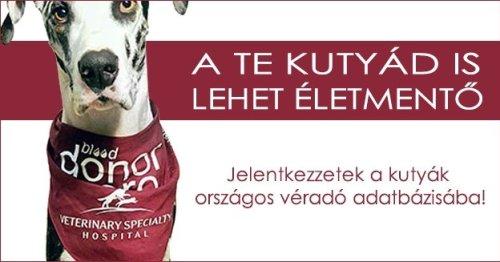 Országos véradó adatbázis készül kutyák számára