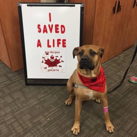 """Véradó kutya - """"Megmentettem egy életet"""""""