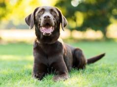 kutyanevek nagytestű kutyáknak