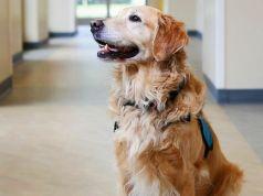 terápiás kutyák