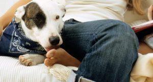 miért nyalogatja a kutya a lábam