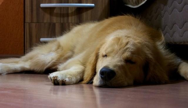 mennyit alszik a kutya