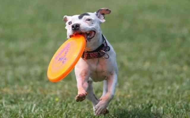 kutya elkapós játék