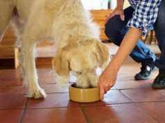 kutya hízlalása