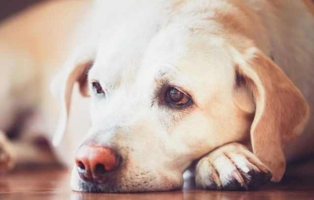 kutya halálának előjelei