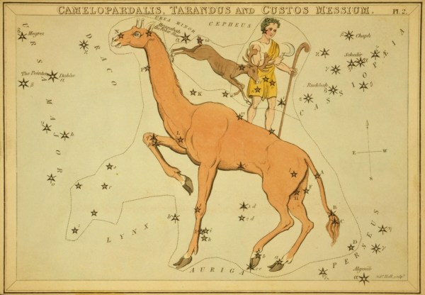 Het sterrenbeeld Tarandus