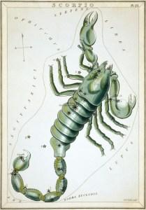 Scorpius uit Urania's Mirror