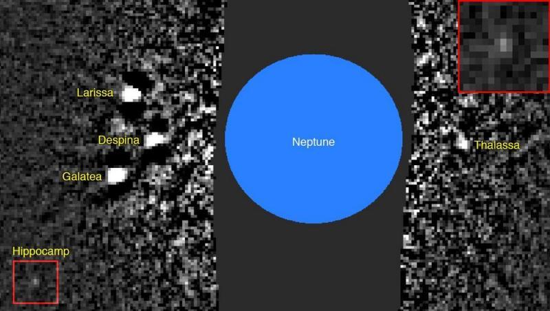 Hippocamp bij Neptunus