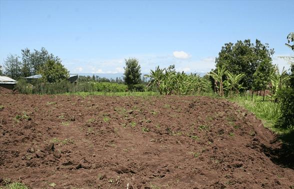 strawberry farming business