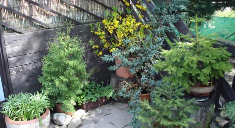 Zelený obývák