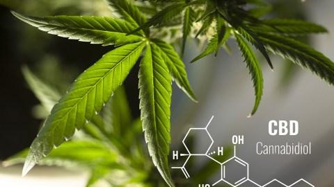 Leaves Cannabis Plant Herbal  - Erin_Hinterland / Pixabay