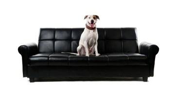 Dog Sofa Pet Animal Human  - Berger-Team / Pixabay