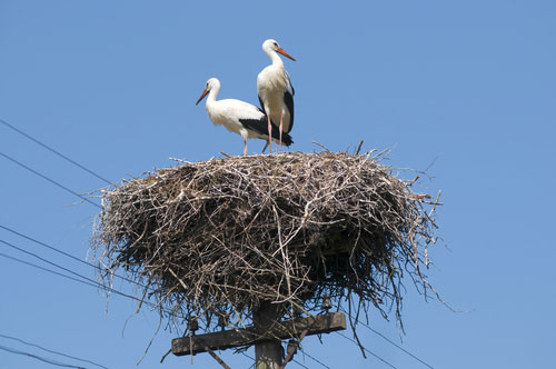 storks-telephone-wire