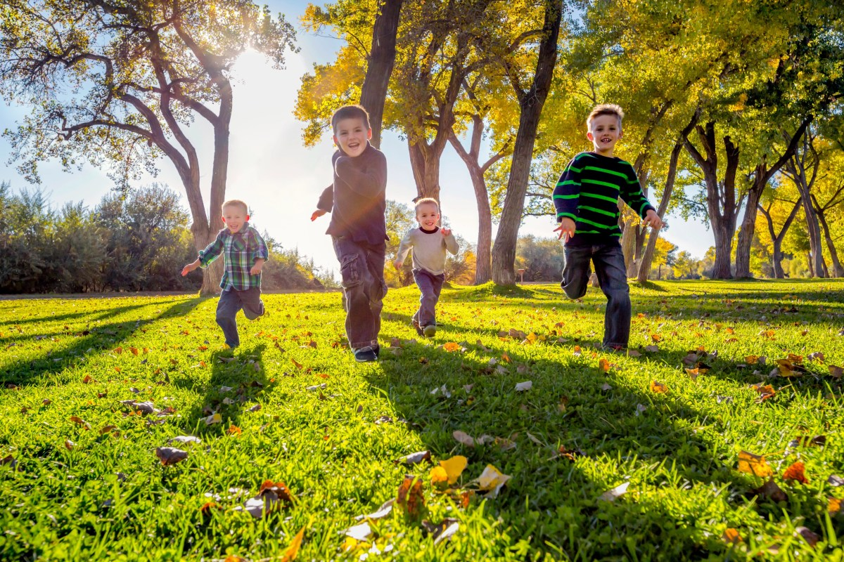Four cute young boys racing across a grass field with dramatic fall colored leaves on giant cottonwood trees in the background. Boys are laughing and having fun.