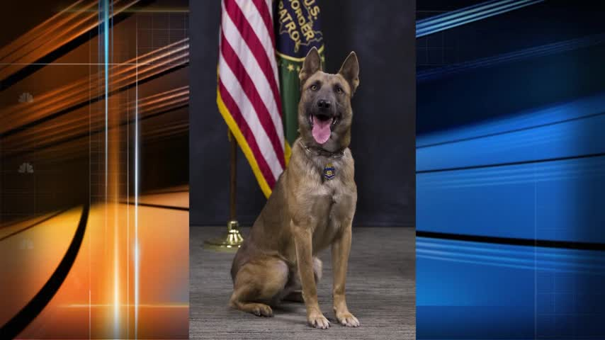 Rescue K-9 succumbs to heat while on duty_91852518-159532