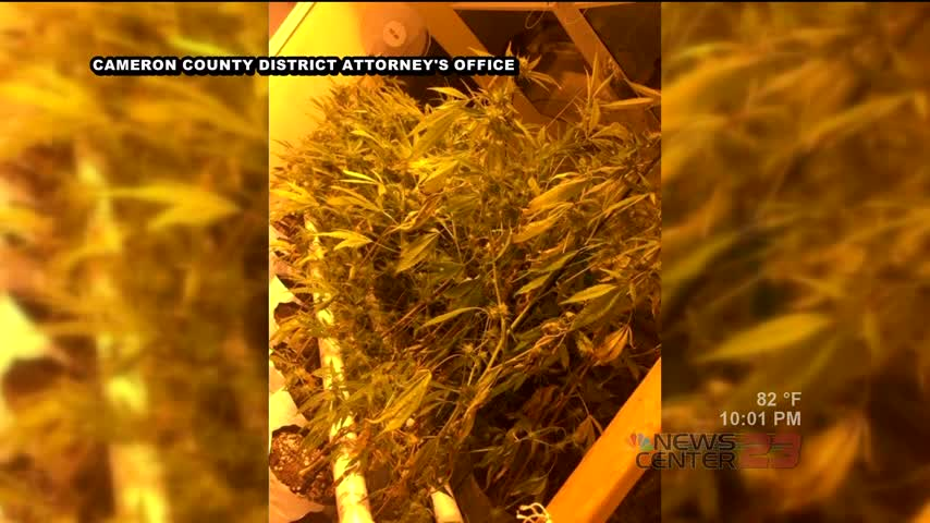 Hydroponic Marijuana Bust in Cameron County_57438727-159532