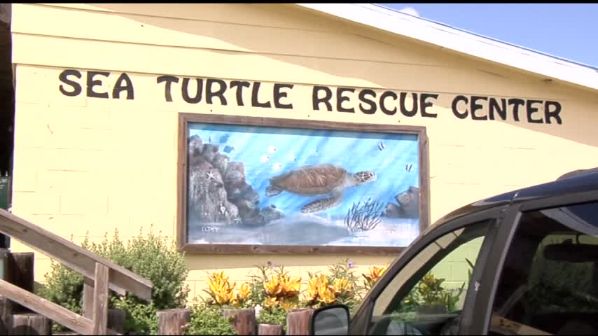 Nesting Turtles Discovered on South Padre Island_65051320