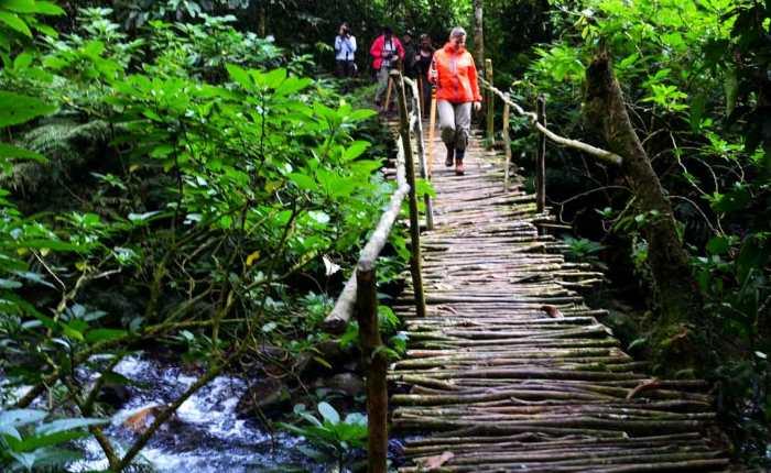 Kwezi Outdoors mountain gorilla tracking