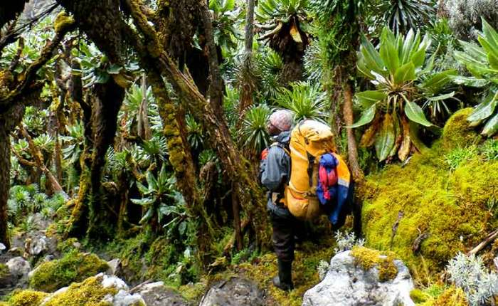 Awesome beautiy of the Mt Rwenzori forests+Uganda+travel_with+Kwez+Outdoors