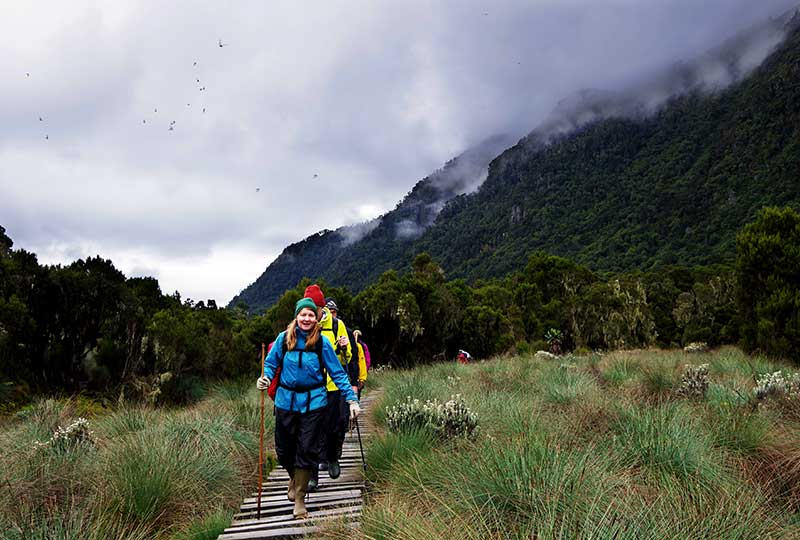 Hikers above the 3900 metre point in the Rwenzori Mountains+Uganda+travel_with+Kwez+Outdoors