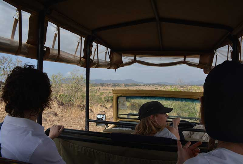 safari tour in kidepo valley national park in Uganda. Safari by kwezi outdoors