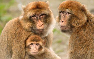 KWR Exergie adopteert twee dieren van Stichting Aap