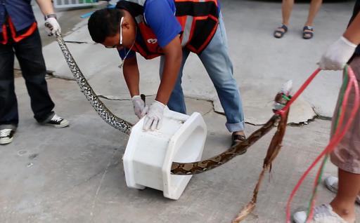 Thailand Toilet Ordeal_290849
