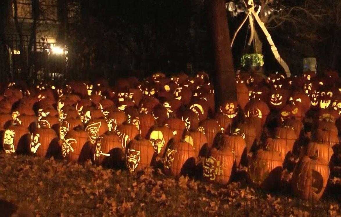 pumpkin display_567545