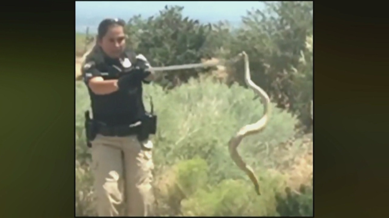 Capture_of__huge__rattlesnake_caught_on__0_20180817042432-846624080