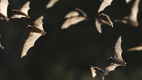 bats_1533567493882.jpg