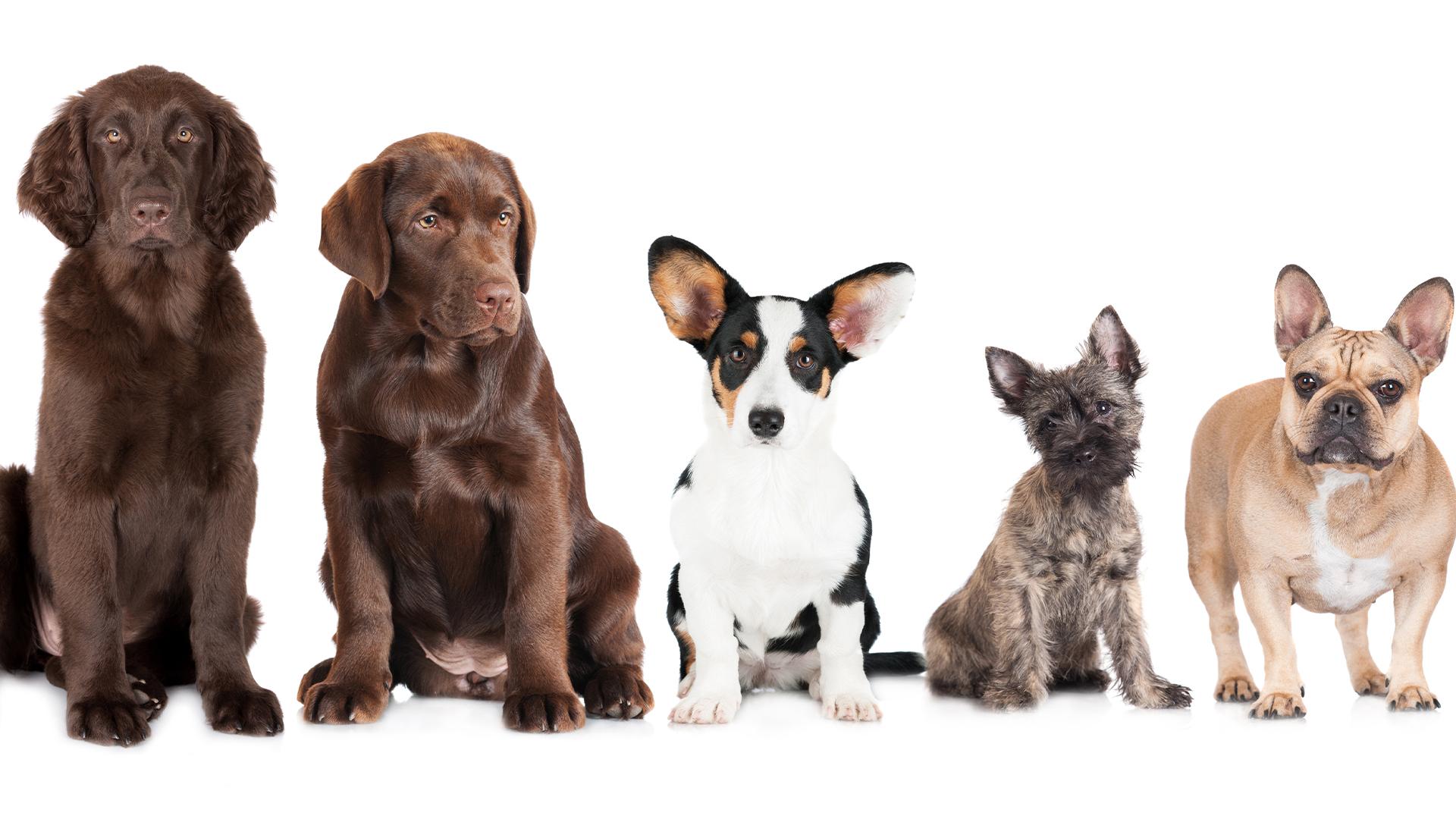 dogs in a line_1556057162380.jpg.jpg
