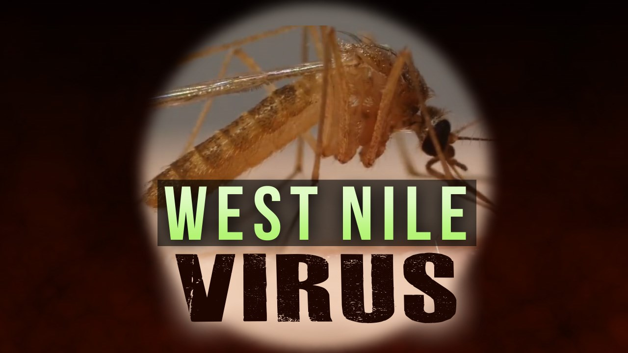west nile_1533746985449.jpeg.jpg